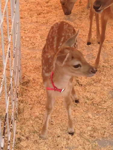 Though adorable, this fawn was not the prize I was after.